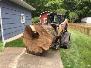 bensalem-stump-removal