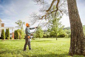 bensalem-tree-pruning