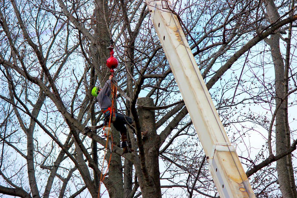 bensalem-tree-removal