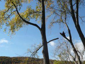bensalem-tree-trimming